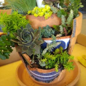 Broken terracotta pot with succulents
