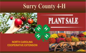 Cover photo for 2019 4-H Fall Plant Sale