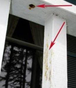 Holes in a porch caused by carpenter bees.