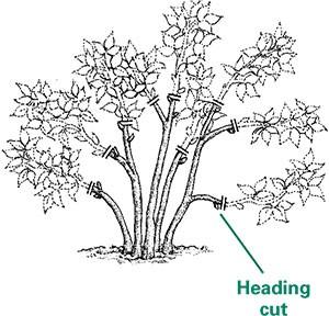 Illustration of a heading cut.