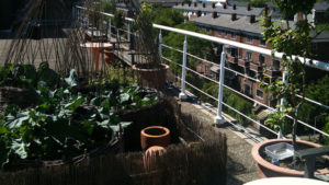 A rooftop garden with plants arranged next to a railing overlooking the street below.