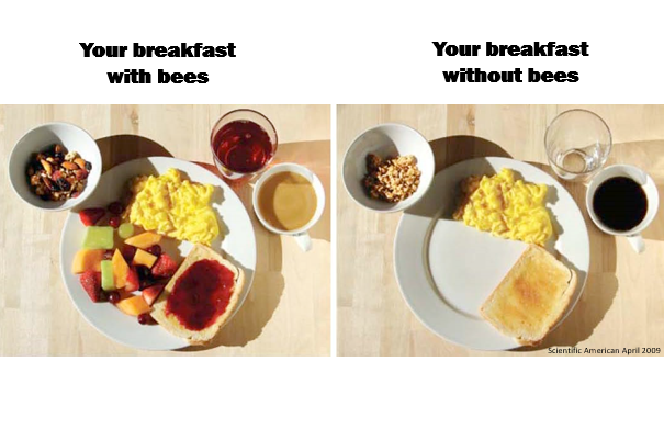 A photo of how your breakfast would look without pollinators. Missing fruit, fruit juice, jam, and nuts.