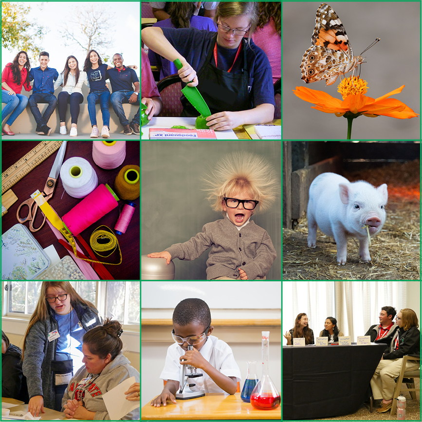 Collage of images representing the eight program areas being offered this summer.