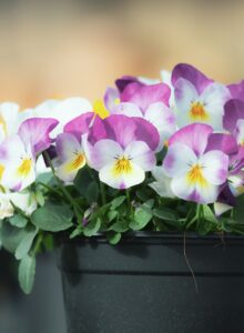 Cover photo for Extension Master Gardener Volunteers to Host Plant Sale
