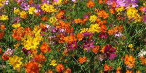 Cover photo for Planting Wildflowers Lunch & Learn